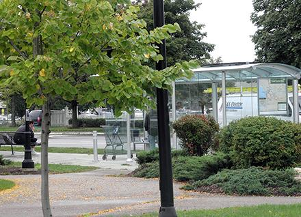 trees and bus shelter