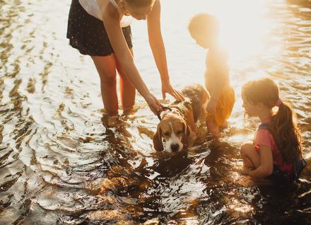 dog with kids in a stream
