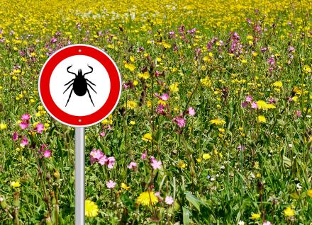 tick sign in field