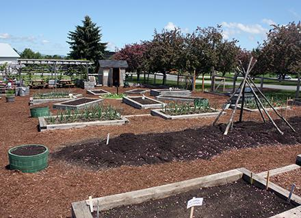 raised gardens beds and paths