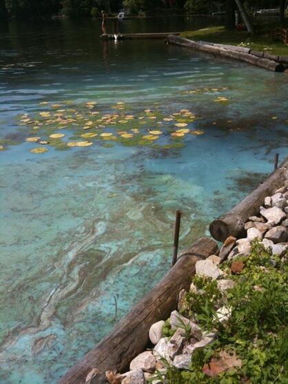 Swirls of cyanobacteria on the surface