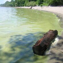 cyanobacteria bloom